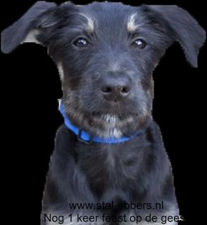 Hondenuitlaatservice pino